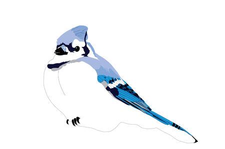 songbird: Blue Jay ready to perch Illustration