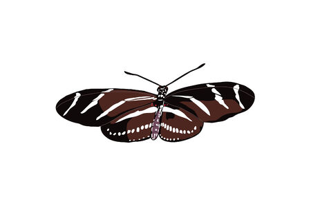 Open winged striped butterfly drawing. Illustration