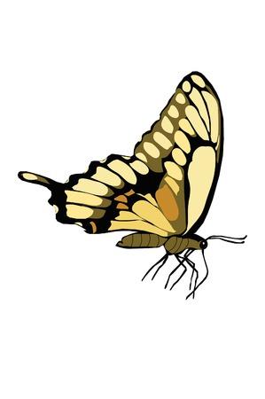 tekening vlinder: Gesloten gevleugelde gele vlinder tekening.