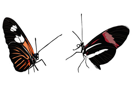 Two colorful small butterflies sitting. Illustration