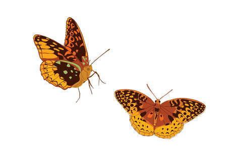 Two brilliant orange butterfly drawings. Vector