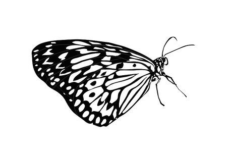 Simple black and white butterfly. Illustration