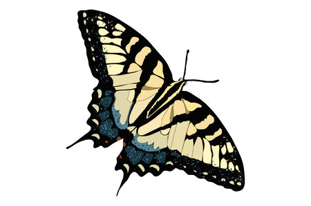 Tiger Striped Swallow Tail Butterfly Illustration