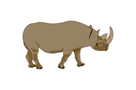 Drawing of a grey rhinoceros. Illustration