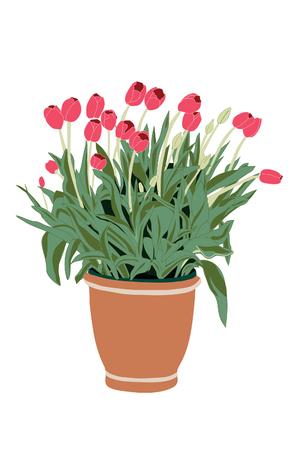 Illustration of a porch pot full of tulips