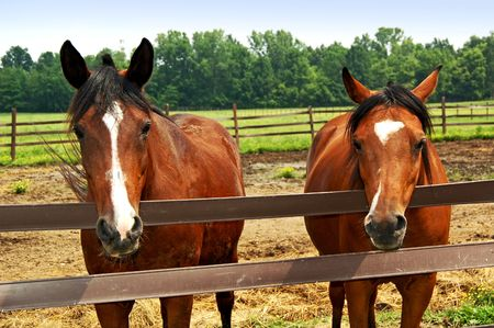 Two Horse in the Corral.