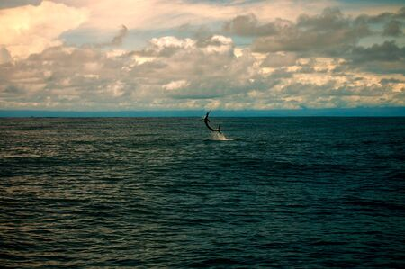 sailfish: This is a soaring sailfish that astounded me when it jumped out of the water