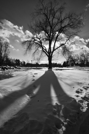 This is the shadow of a beautiful bare tree during the winter months in Massachusetts