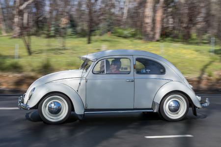 Adelaide, Australia - September 25, 2016: Vintage Volkswagen Beetle driving on country roads near the town of Birdwood, South Australia.