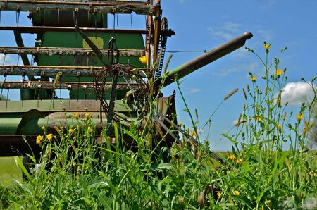 An green  old combine is surrounded by weeds