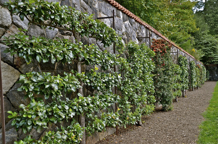retaining: Beautiful vines, flowers, and shrubs are growing against a rock retaining wall