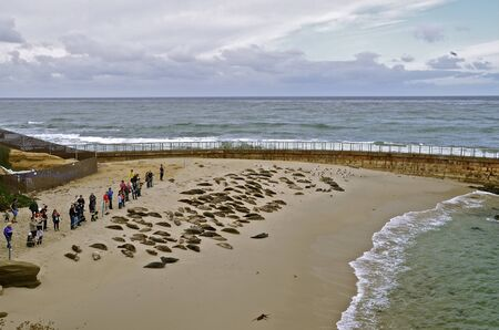 sunning: Tourists line up to view the sea lions sunning in the beach at La Jolla, California Stock Photo