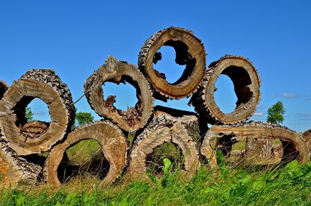 cottonwood tree: Huge chunks of a cottonwood tree with hollowed out centers are stacked in a pile. Stock Photo