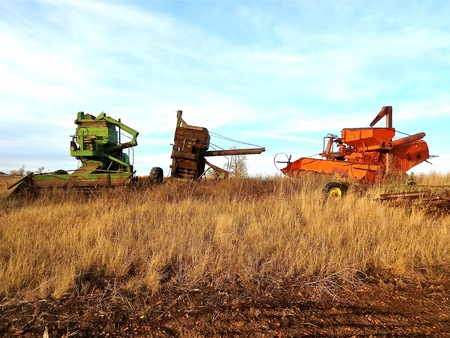 thresh: Three old self propelled combines left in the long autumn prairie grass