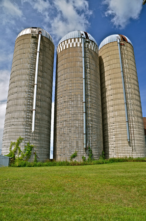 Huge white concrete stave silos of a dairy farm