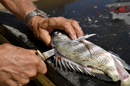 skinning: A fisherman uses  sharp filleting knife is used to clean a fish