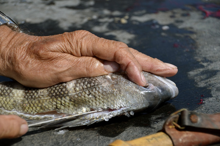 A fisherman uses  sharp filleting knife is used to clean a fish photo