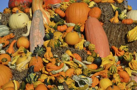 pumpkins gourds: The colors of autumn are displayed in the collection of pumpkins gourds and squash.