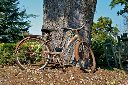Vintage bicycle is parked against the trunk of a huge maple tree