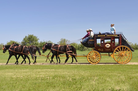 ponies: FORT SISSETON SD June 6 2015: Horses pulling a beautiful stagecoach at the Fort Sisseton Historical Rendezvous where thousands attend the festival each first weekend in June to observe the culture of military life at the old fort.