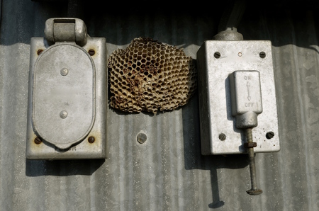 antiquated: Wasp nest resides between two antiquated electrical boxes ion corrugated metal.