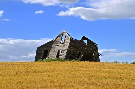 rickety: An old frame of a weathered rickety house is surrounded by a ripe wheat field.
