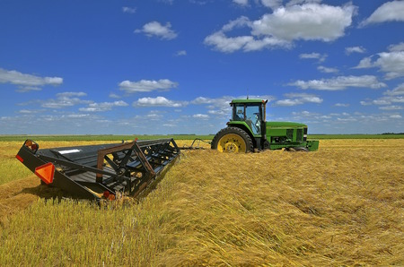 A new John Deere tractor is pulling a swather in a golden field of wheat