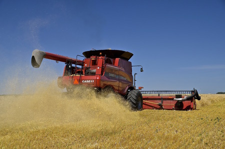chaff: MOORHEAD, MINNESOTA-August 3, 2015: A Case Internation Harvestor self propelled combine is in the process of harvesting wheat as the chaff, straw, and dust are spewed  out in the back of the machine.