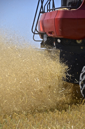 chaff: Chaff, dust, and straw leave a combine as wheat is harvested in a field