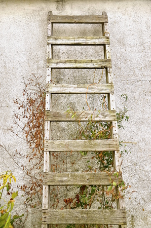rungs: An old wood ladder leaning against a stucco wall is surrounded by ivy, vines, and wild flowers