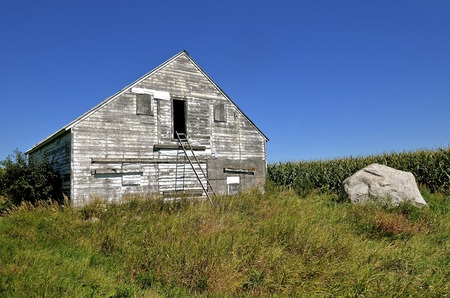 maturing: A ladder leans against an old granary along the edge of a maturing cornfield.