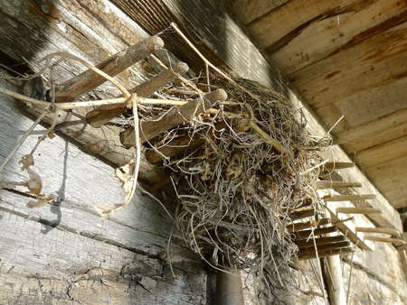 A small bird nest is located in the entrance overhang of an old log cabin.