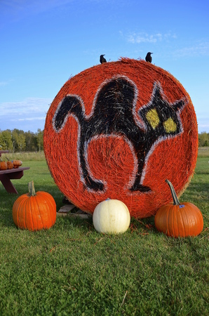 shocks: A spooky black cat is painted on an orange colored round bale surrounded by pumpkins.