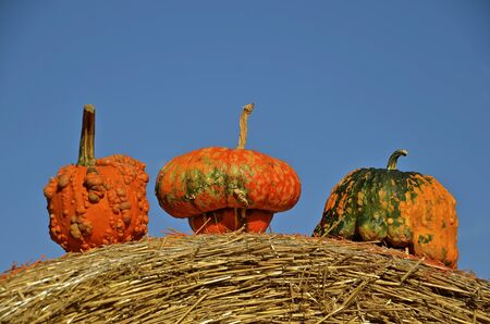 depict: Colorful gourds are placed on the top of a large round bale.