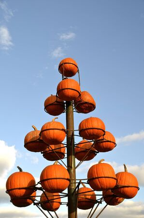 autumn colouring: Pumpkins displayed in circular holders forming the outline of a tree.