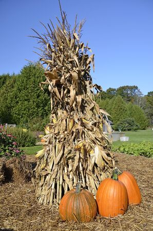 shocks: Pumpkins and a corn shock provide the colors of the autumn season.