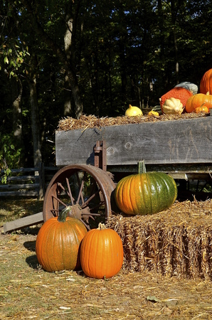 shocks: A bale of straw, gourds, and an old weathered wagon pumpkins  create a fall autumn scene