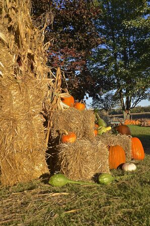 shocks: Bales of straw, gourds, and pumpkins create a fall autumn scene.