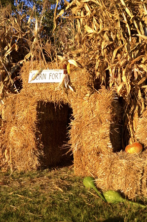 gourds: Autumn corn fort composed of bales of straw and shocks of corn decorated with pumpkins, gourds, and squash
