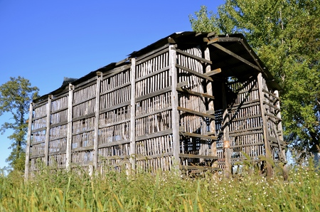 drying corn cobs: Gray old weathered wood lath corn crib