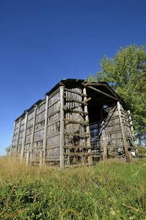 drying corn cobs: Weathered old wood lath corncrib on a farm