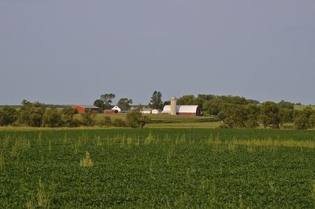 Over het veld soja is een melkveebedrijf samenwerking met de ochtend stralen van de zon schijnt er binnenkort opzetten