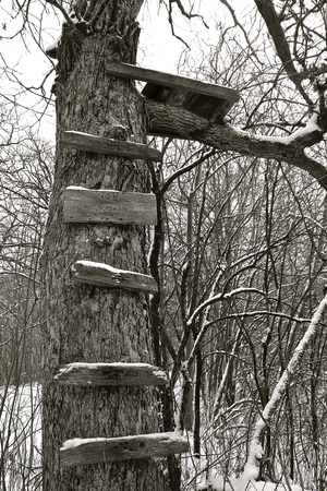 rickety: Fresh snow falls on an the rickety old steps on a huge oak tree leading up to a homemade deer stand Stock Photo