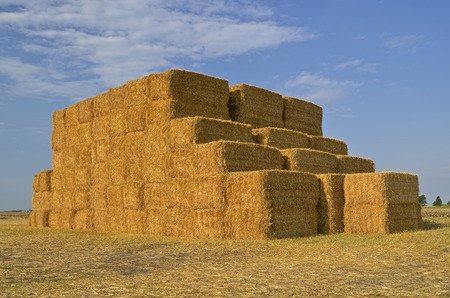 Huge square bales of  straw stacked in a field of wheat stubble.