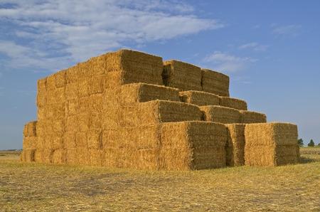 Enorme vierkante balen stro gestapeld in een veld van tarwe stoppels.