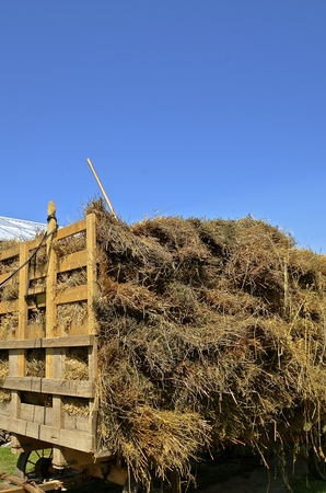 bundles: A rack full of oat bundles ready for threshing