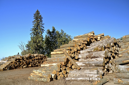 Piles of logs stacked up at a sawmill to be used in building pallets. Stock fotó