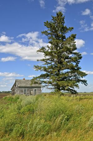 old items: An old weathered house and a solitary pine tree are the only items remaining on a homestead in the prairie. Stock Photo