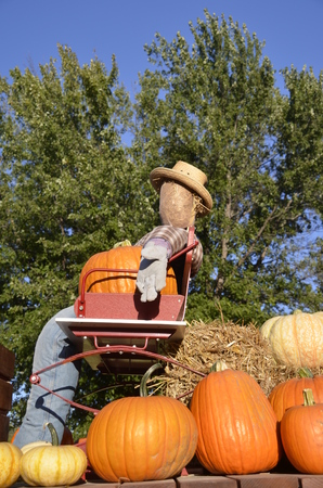 flanked: A cowboy straw perched on a buggy seat is flanked by various colored pumpkins and gourds.