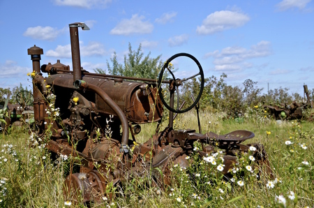 corrosion: Wheels missing on an old tractor left in the flowering weeds and grass